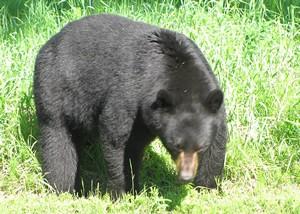 bearpage4