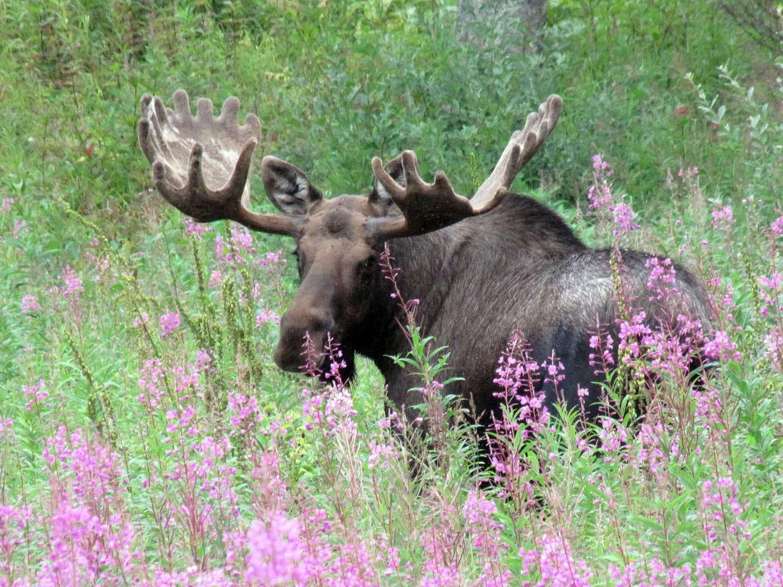 Alaska Ecotourism Guides